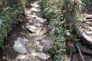 깎이고 할퀸 암반·나무뿌리…한라산 탐방로 곳곳 훼손