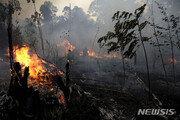 """아마존 화재에 원주민들 """"투기꾼 벌목꾼들과의 전쟁"""" 선포"""