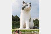 대형 고양이[고양이 눈]