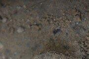 몽골 흉노 무덤서 은제 허리띠 장식·백화수피제 모자 출토