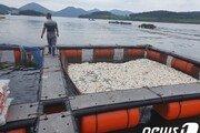 8일째 적조 경보…여수 돌산 양식어류 24만마리 폐사