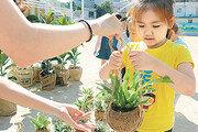 아이들 교실에 공기정화식물 전달