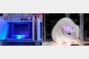 레이저 쏘면 뇌신경 'ON'… 빛으로 동물행동 제어한다