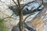 아기 코끼리 구하려다… 참변 부른 '코끼리의 가족애'