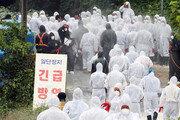 """도사린 구제역-AI-돼지열병 공포… """"방역기관 일원화 시급"""""""