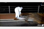 서울 가양대교 인근 멧돼지 출몰…사체 방역 당국에 넘겨