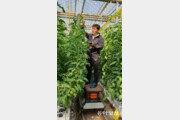 흙 한점 없는 바닥… 로봇이 온도 조절… 실험실인지 농장인지