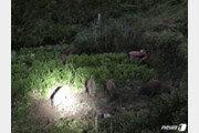 서울 종로·송파·강동 멧돼지 출몰…포획은 모두 실패