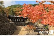 깊어가는 가을, 물드는 단풍…지리산국립공원 '오색빛'
