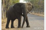 극심한 가뭄 때문에…짐바브웨 코끼리 55마리 '아사'