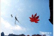 거미의 가을[고양이 눈]