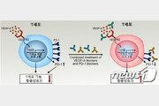 KAIST-연세대, 암세포의 면역세포 억제 핵심 원리 규명