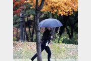 낙엽 사이로 겨울 재촉하는 비