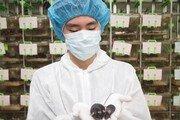 쥐 한마리에 데이터 400개… 인류 희귀병 비밀 푼다