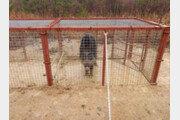 서울 태릉 문정왕후 무덤서 멧돼지 포획…포획틀 설치 한달만에
