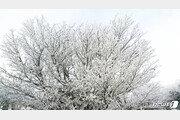 서리꽃 활짝 핀 한라산 '첫눈'…완연한 겨울 풍경