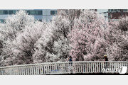 [날씨] 26일 봄꽃 피는데 전국에 비…제주 산지 300㎜ '물폭탄'