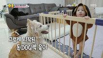 강형욱 DOG박 육아 비법!