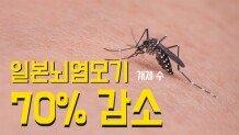 일본 뇌염 모기 70% 감소