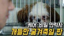 '케어' 비밀 안락사 논란에 후원중단…개들만 굶겨죽일 판