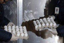 미국산 달걀 표본 도착…다음주 본격 유통