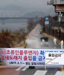 서울도 AI 비상… 반려동물 한강변 산책 삼가야