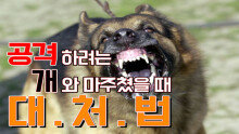 공격하려는 개와 마주쳤을 때 대처하는 법