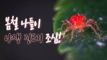 봄철, 야생 진드기 기승
