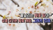 """""""흩날리는 벚꽃 잎이~"""" 성큼 다가온 벚꽃 개화, 그래서 언제?"""