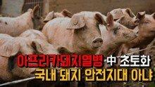 아프리카돼지열병 中 초토화...국내 돼지 안전지대 아냐