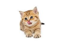 日, 고양이 인공 혈액 개발