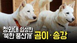 청와대 입성한 '북한 풍산개' 곰이·송강