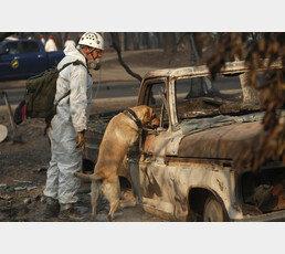 캘리포니아 산불지대의 애완견, 한 달 동안 집지키며 생존