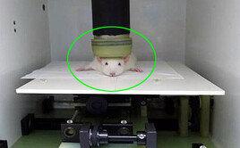 '희생 없는 동물실험 가능해지나' 국내 연구진 기술 개발