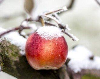 이불밖은 위험해! 겨울엔 제철음식으로 다이어트!