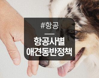 항공사별 애완동물 비행기 탑승 정책 총정리! (대한항공, 아시아나항공, 제주항공, 진에어)