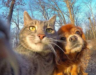 그루밍, 아픈 고양이가 주인에게 보내는 SOS