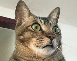 중저음 목소리를 가진 고양이의 비밀