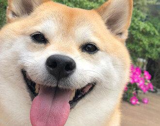강아지 한 마리는 행복, 여섯 마리면 행복이 6배