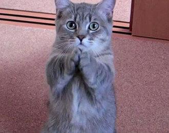 배고픈 고양이의 필살기