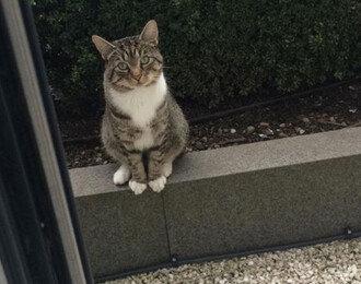 같이 놀자~ 친구 보러 찾아오는 고양이