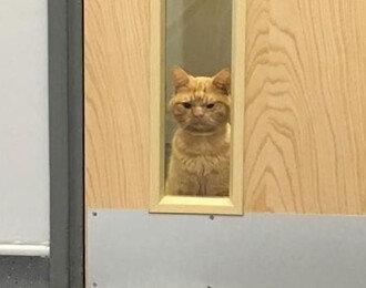 화난 얼굴을 한 고양이의 비밀