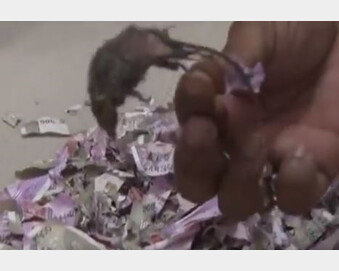 ATM 열어보니 지폐 2천만원 갈기갈기…쥐떼가 그랬다고?