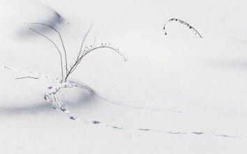 [장승윤의 사진 사람 사랑]삿포로 겨울풍경