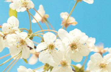 4월 분양시장 폐장…2분기 최적의 분양시기는 대체 언제?