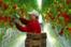 '흙' 없이 난 토마토도 유기농 채소일까?...美 농부들 뿔 났다