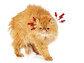 고양이 스트레스 유발 원인