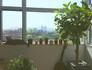 식물과 고양이와 햇살이 가득한 집, '샐리의 숲'