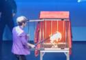 """""""해맑게 웃으며 실수""""… 에이프릴 진솔, 최현우 마술쇼 '트릭 노출'"""