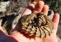 등산 중 발견한 특이한 생김새의 돌… 알고 보니 '깜짝'